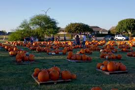 Pumpkin Patch College Station 2017 by The Color Of Fall Glen Vigus