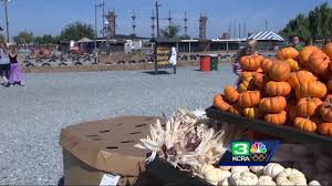 Lathrop Pumpkin Patch Maze by Dell Osso Farms Has Plenty Of Fall Fun For Everyone