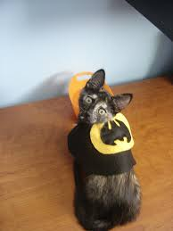 cat batman costume 16 costumes for dogs cats and other pets as nerdy as