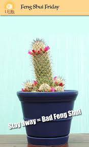 Best Plants For Bathroom Feng Shui by 115 Best Feng Shui Images On Pinterest Feng Shui Desk And Plant