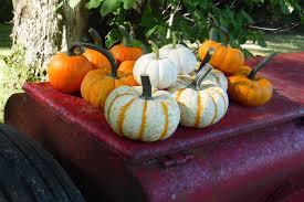 Siegels Pumpkin Farm by 2017 Price List U2013 Patton U0027s Pumpkin Patch