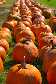 Boulder Pumpkin Patch 2015 by Autumn Kitchen Klutz Blog
