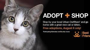 adopt a cat outfitters in nyc partners with best friends funds cat