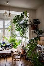 houseplants pflanzen für innen dschungel dekorationen