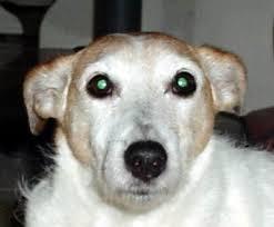 clindamycin for cats clindamycin antibiotic for dogs cats 1800petmeds