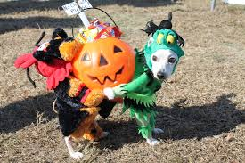 Westbury Gardens Halloween by Howl O Ween Pet Parades On Long Island Lipetplace