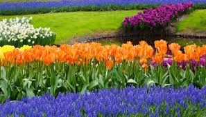 gardening tip of the week 3 easy steps to planting fall bulbs