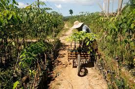 100 Seedling Truck Tree Nursery In Agusan Del Sur MindaNews