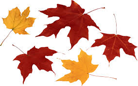 Autumn leaves PNG images free PNG yellow leaves pictures