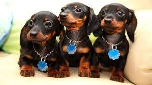 low maintenance dogs top 15 low maintenance dogs