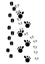 Coloring Page Animal Tracks
