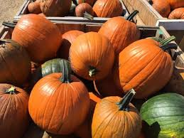Pumpkin Farms Wisconsin by The 10 Best Pumpkin Patches In Wisconsin In 2016