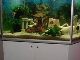 aquarium d eau douce bien démarrer un aquarium d eau douce