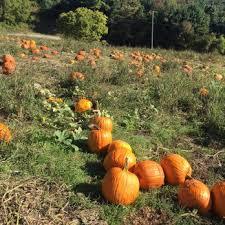 Piedmont Service Center Pumpkin Patch by Hollin Farms 121 Photos U0026 80 Reviews Fruits U0026 Veggies 1410