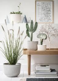 zimmerpflanzen greenery wohnen mit pflanzen