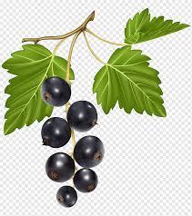 italienische küche lombardi s berry blackcurrant