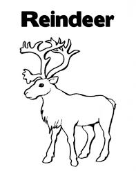 Free Printable Reindeer Coloring Pages For Kids Within