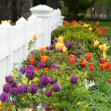 10 tips for protecting tulip bulbs