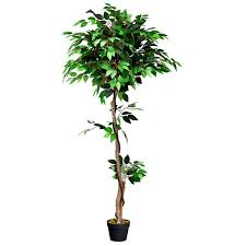 Dracaena Happy Plant At Poppys Home And Garden Newcastle