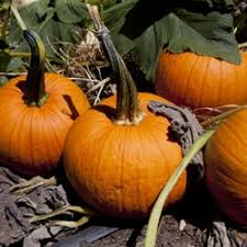 Pumpkin Patch Near Green Bay Wi by Brookshire Farms 62 Photos U0026 47 Reviews Pumpkin Patches 4747