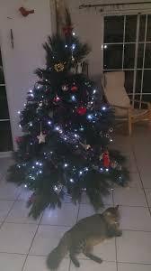 Mr Jingles Christmas Trees San Diego by December 2013 Family History Across The Seas
