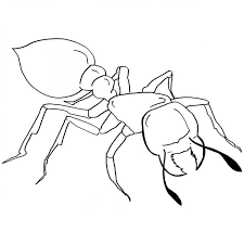 Ideas Ant Coloring Pages On Ants Page Beautiful To Print Animal