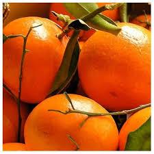 huile parfumee pour bougie parfum pour bougies mandarine fabrication de bougies