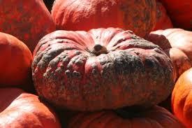 Pumpkin Patch In Homer Glen Illinois by Best Pumpkin Patches In The Chicagoland Area U2014 Tiaras U0026 Tantrums