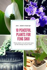 Best Plant For Bathroom Feng Shui by 2139 Best Feng Shui Images On Pinterest Feng Shui Feng Shui