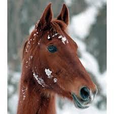 Horse Hair Shedding Blade by Equine Winter Skin Care Expert Advice On Horse Care And Horse Riding