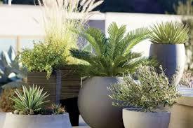 7 Tall Pot Gardens Designs Fleurs De Jardin Dt Ides Darrangements