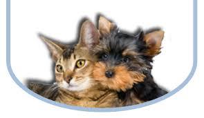 cat dental care and cat dental care pet dental care mt prospect vet