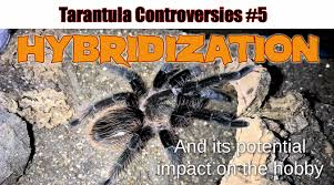 Do Tarantulas Shed Their Fangs by Tarantulas Tom U0027s Big Spiders