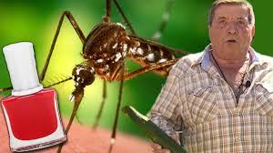 die besten hausmittel gegen mücken und insekten im haus blick