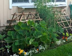 Homemade Fertilizer For Pumpkins by The Perfect Pumpkin Patch Hope Gardens