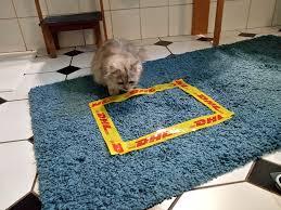 warum sich katzen ins klebeband rechteck setzen mdr de