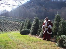 Fraser Fir Christmas Trees Nc by Christmas Trees In North Carolina Christmas Lights Decoration