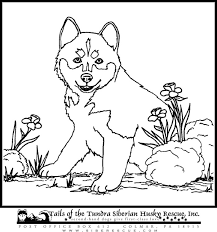 Siberian Husky Coloring Pages New Puppy Drawing To Color Clipartxtras Of Lovely Cute Pics