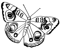 Awesome Free Butterfly Coloring Pages Learning Ideas