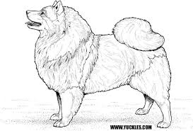 Fat Realistic Husky Coloring Pages