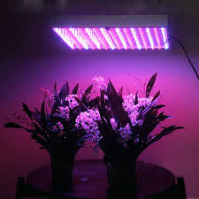 best light fluorescent lights for plant growth fluorescent light