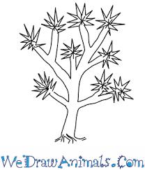 joshua tree thumb