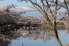 fleur et plante du lac images gratuites arbre eau branche neige hiver plante lac