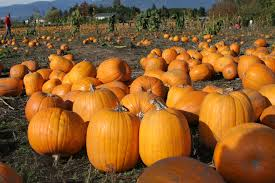 Pumpkin Patch Miami Lakes by Events Waterloo Residences University Of Waterloo
