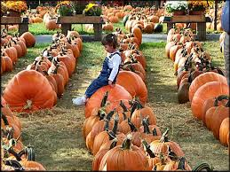 Pumpkin Patch Near Pensacola Fl by 161 Best Memory Lane Images On Pinterest North Carolina