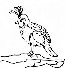 This Section Includes Enjoyable Colouring Free Printable Homework Quail Coloring Pages And Worksheets For Every Age