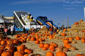 Alameda Pumpkin Patch 2015 by The World U0027s Best Photos Of Alameda And Alamedapoint Flickr Hive Mind