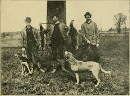 Do Treeing Walker Coonhounds Shed by Coon Hunting Wikipedia