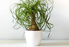 pflegeleichte zimmerpflanzen unsere top 10 plantura