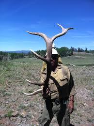 southern utah hunt and fish late season elk sheds
